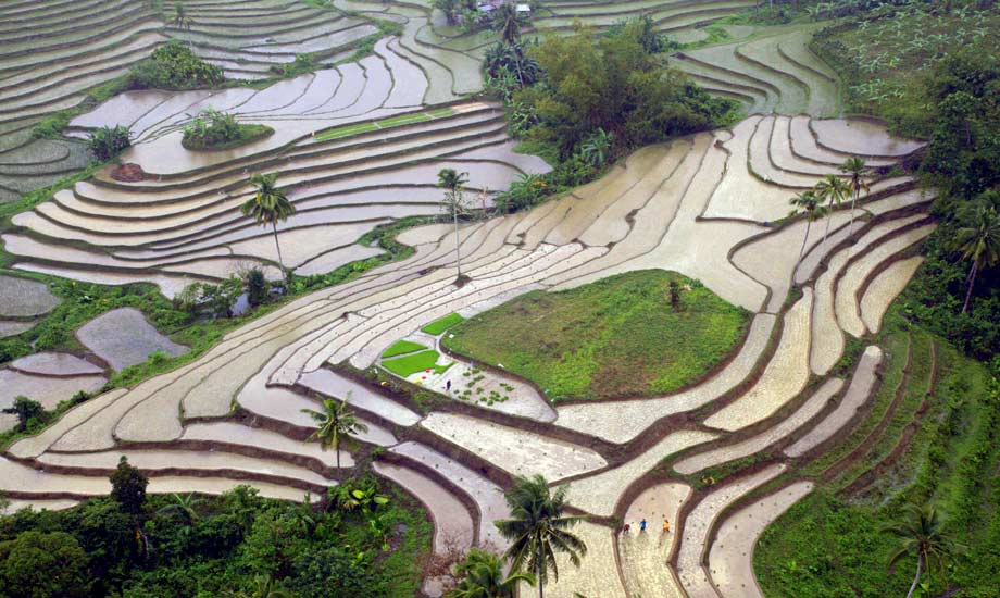 Bohol aerial photograph rice terasses bohol philippines