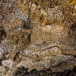 Kangcaramel cave tanday saragosa rd baclayon bohol philippines 0002
